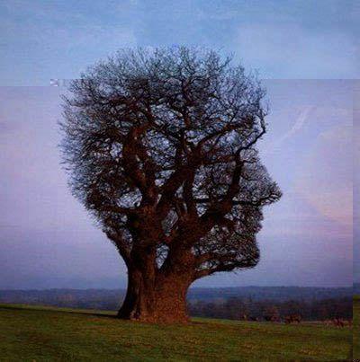 weird-tree.jpg