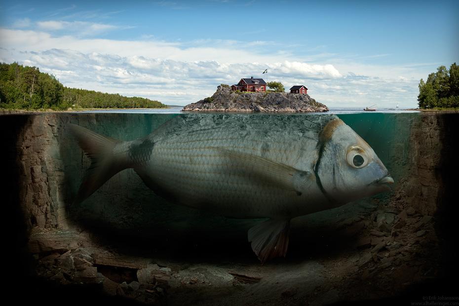 Big fish? Picture of a big fish!