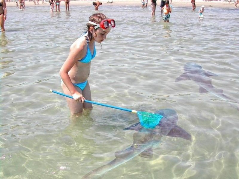Fishing sharks net