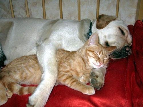 Смешное видео про котов Коты достают собак | ВКонтакте
