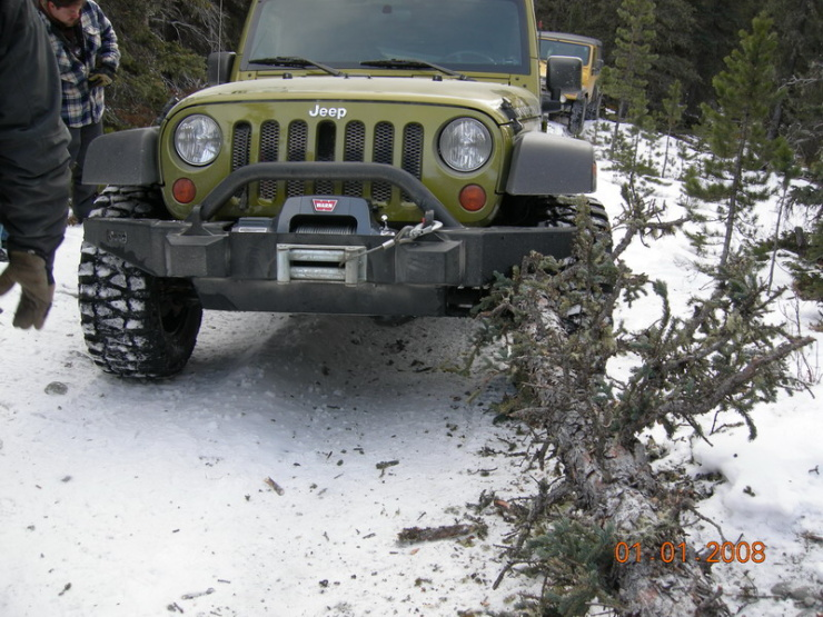 Jeep accident tree