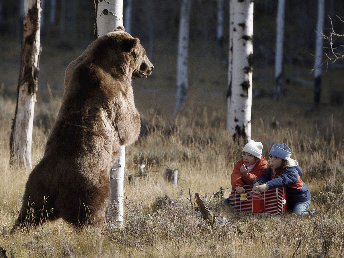 catching bear