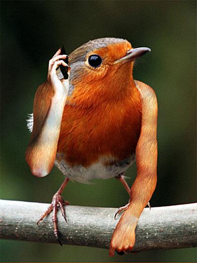 bird-phone.jpg