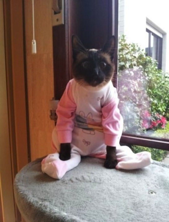 pink cat pajamas