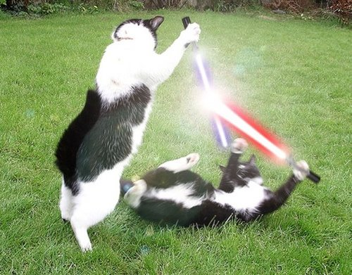 Funny pics, videos and jokes - Page 5 Cats-lightsabers