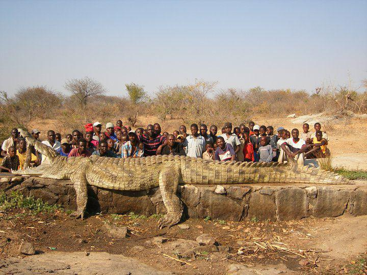 Amazing! This huge crocodile has been caught in Nigeria, Africa. Is