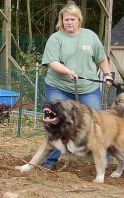 Bad dog bad