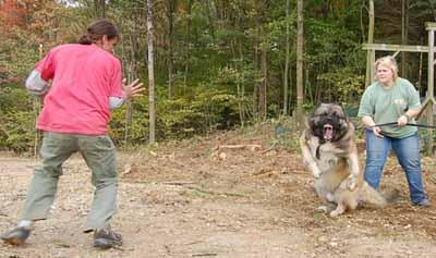 Canine attack