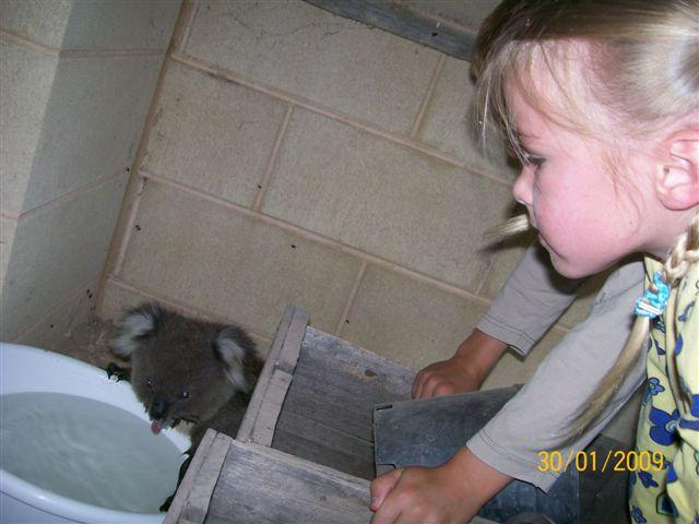 Water for a koala
