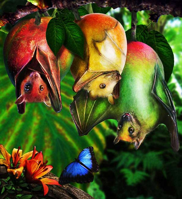 Animal fruits