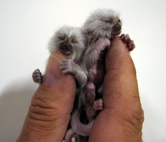 2 finger monkeys!