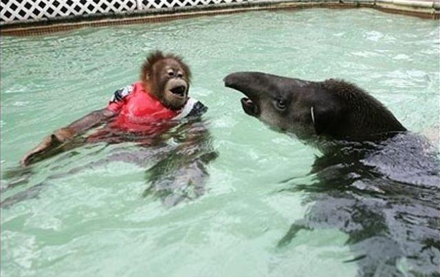 Funny Swimming Pool : Shewhoshighlyfavored me and matt