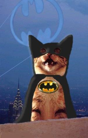 cat wearing a batman suit