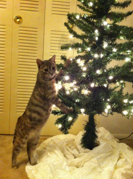 Cats and Christmas Trees!