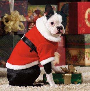 Image result for dog christmas gift
