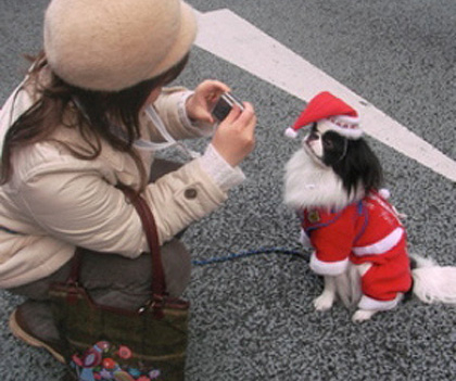 Small dog Christmas