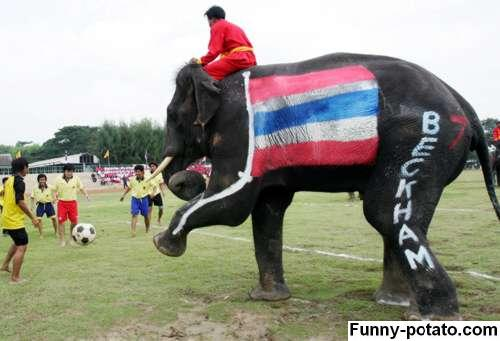 elephant playing soccer