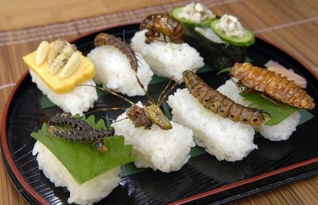 bugs sushi