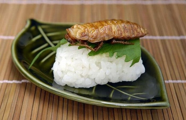 insect rice
