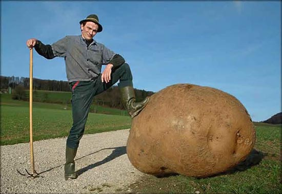 world Biggest potato