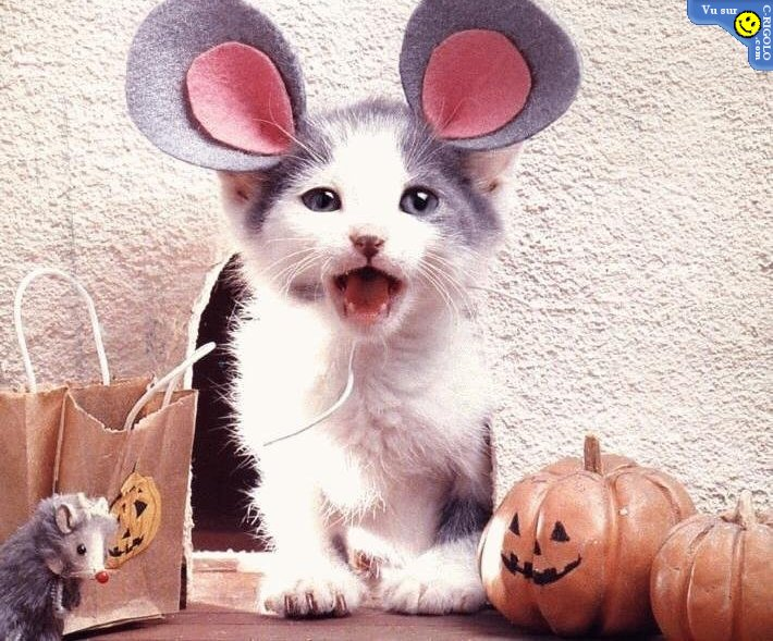 http://www.funny-potato.com/images/halloween/cat-mouse.jpg