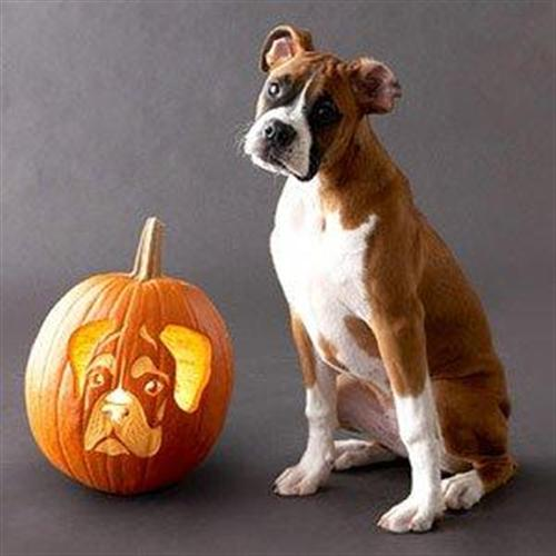 Dog pumpkin carving halloween pictures