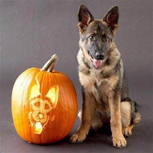 Dog Pumpkin Carving St...