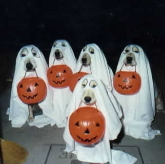 dogs disguise Funny Halloween Pictures