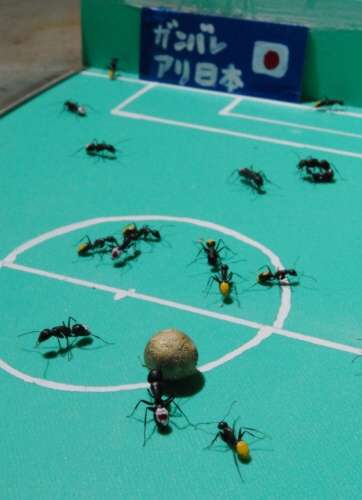 soccer game with ants