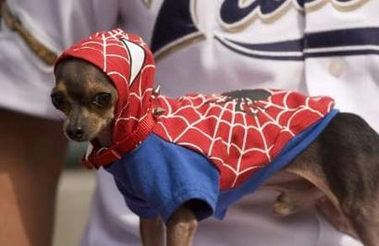 [Image: dog-spiderman.jpg]